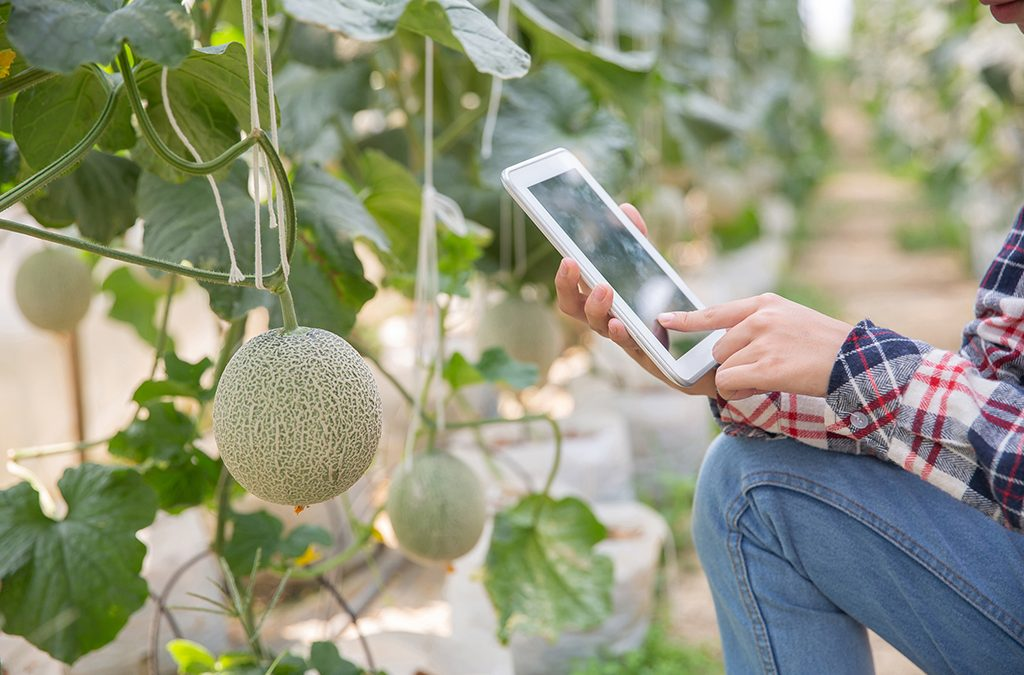 Jornadas de difusión de TICS4FRUIT organizadas por Fepex en Fruit Attraction 2020