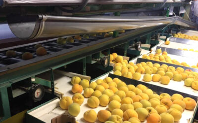 Febrero: Identificar los daños en frutas en el último eslabón de la cadena.